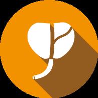 prostata-icona